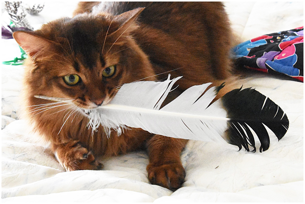 Rocky's Feather