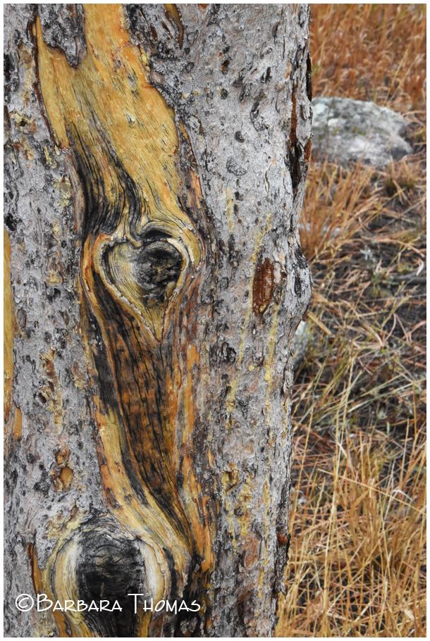♥︎ Tree