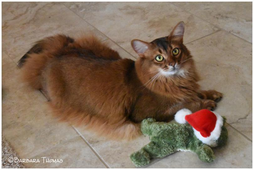 Rocky & The Christmas Frog