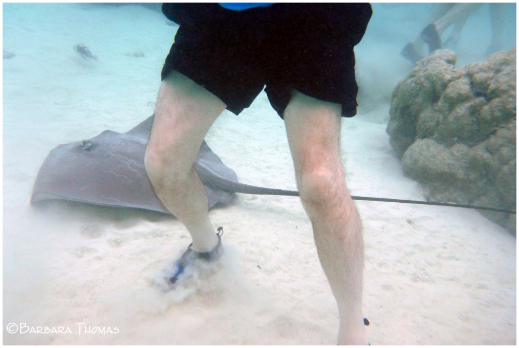 Stingrays & Hairy Legs