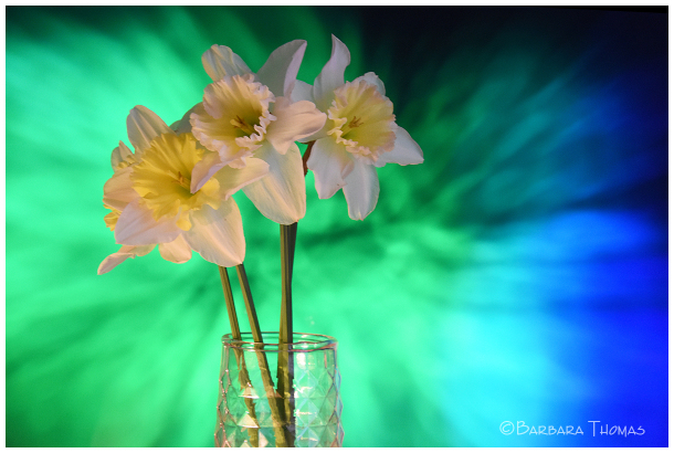 Daffodils #4