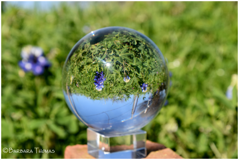 Lensball Bluebonnets