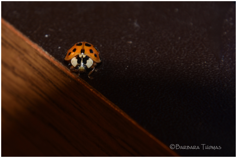 Angry Bug