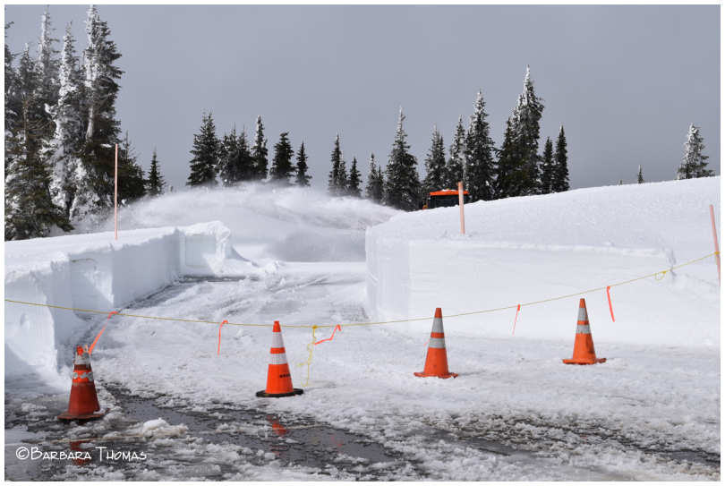Road Clearing