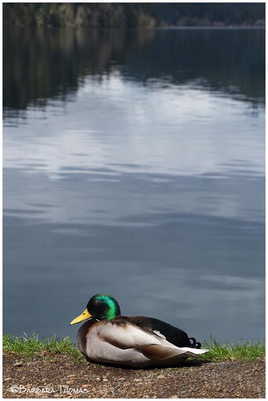 If It Looks Like A Duck...