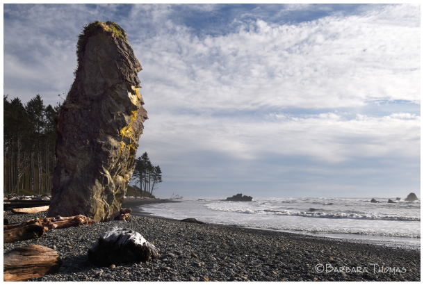 Rocks And Driftwood