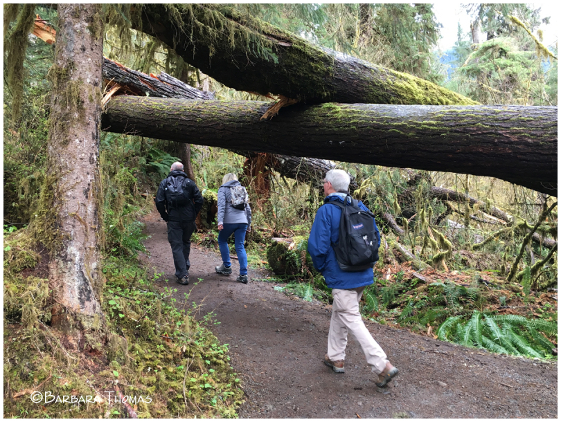 Hiking The Hoh Rain Forest