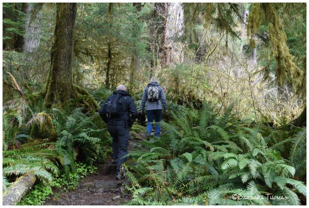 Enchanting Hike