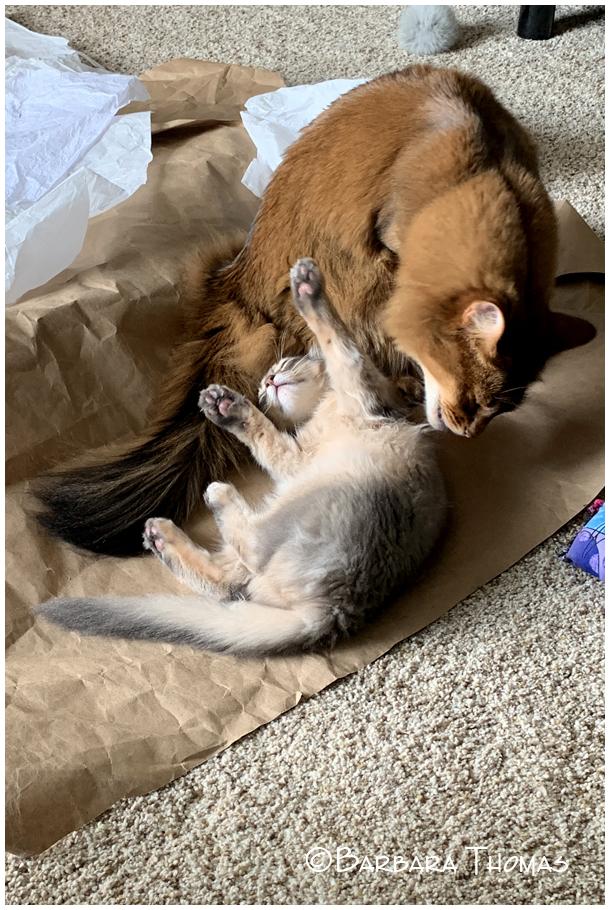 Rocky & His Kitten