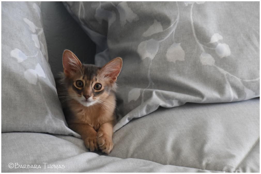 Little Jasper
