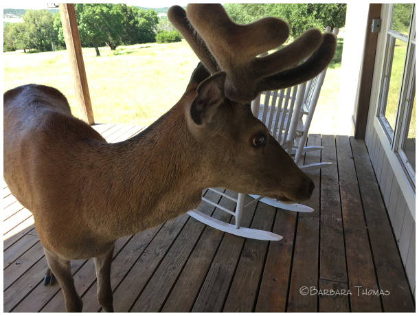 Rockin' Deer