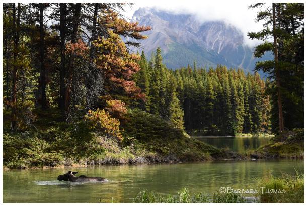 Moose Lake hike
