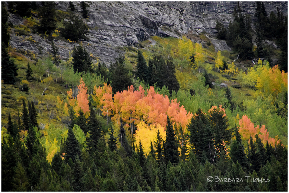 Autumn In Canadian Rockies