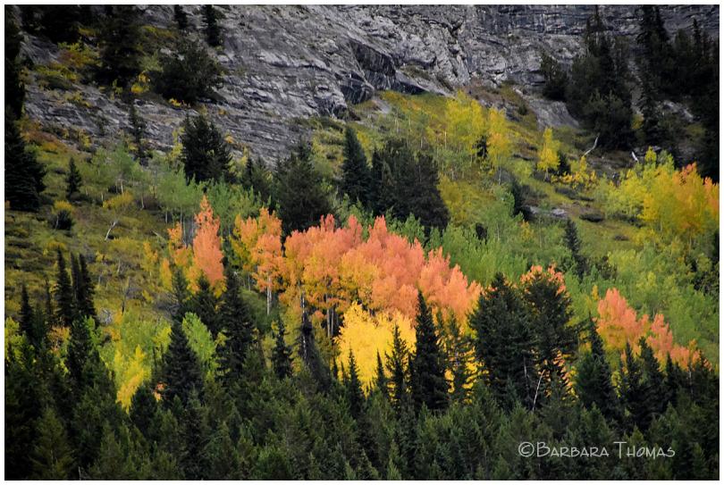 Autumn In Canadian Rockies