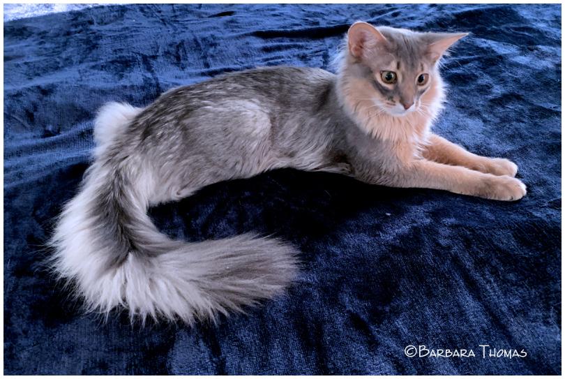 Kitten Jasper