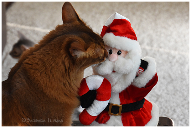 I Saw Rocky Kissing Santa Claus