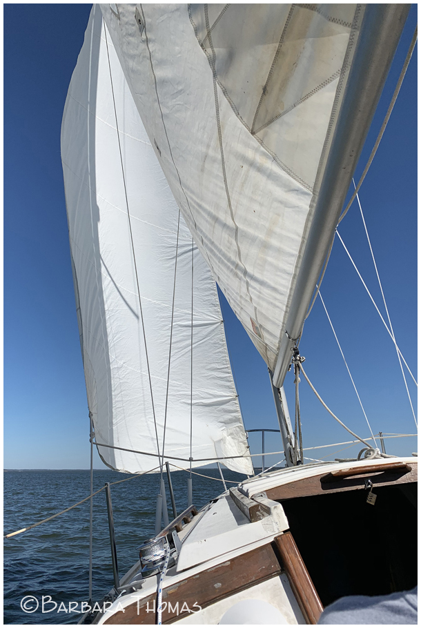 White Sails & Blue Water