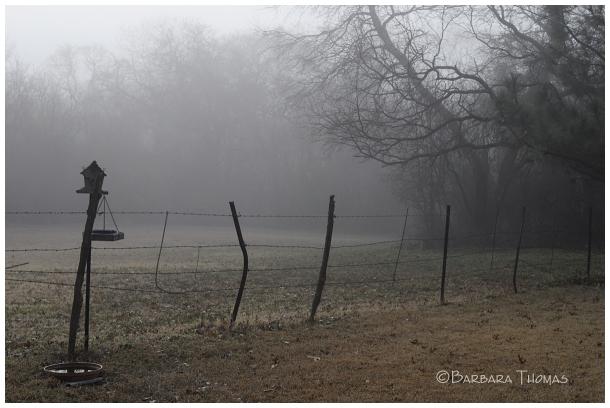 Back Yard Fog