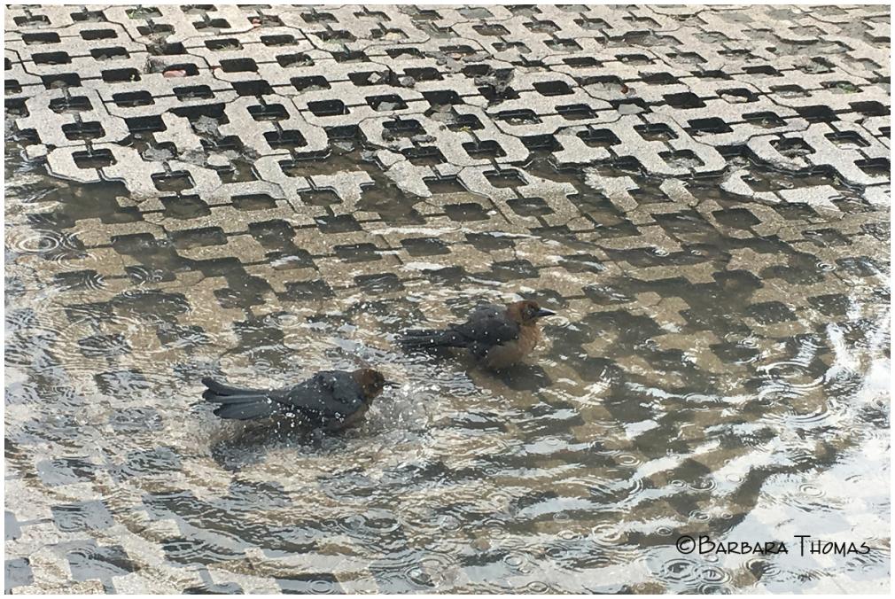 Street Birdbath