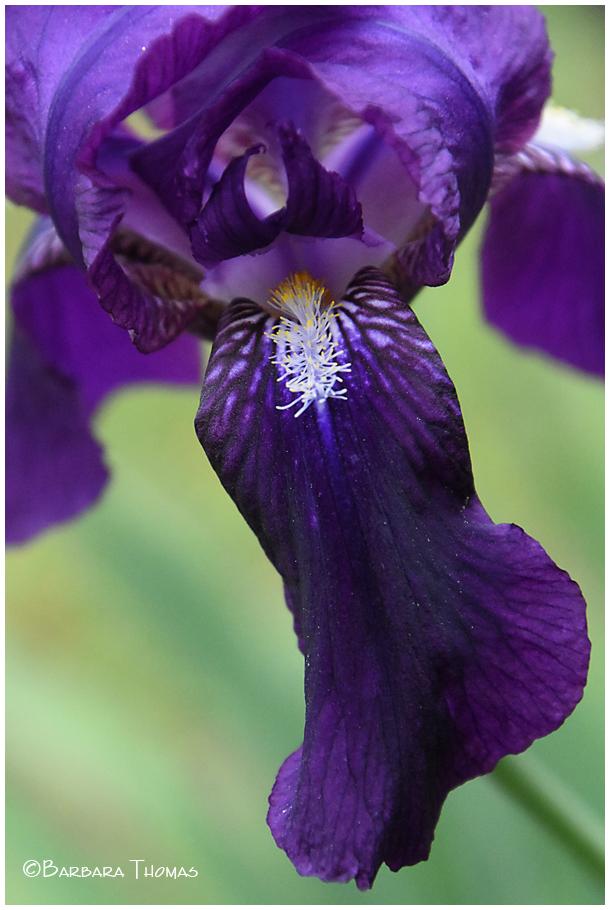 Iris Inside
