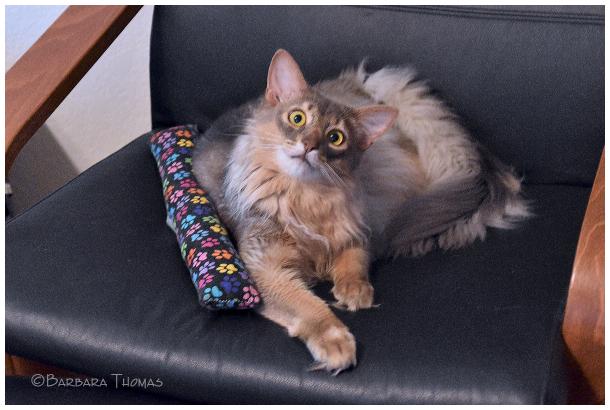 Jasper Watching Cat Videos