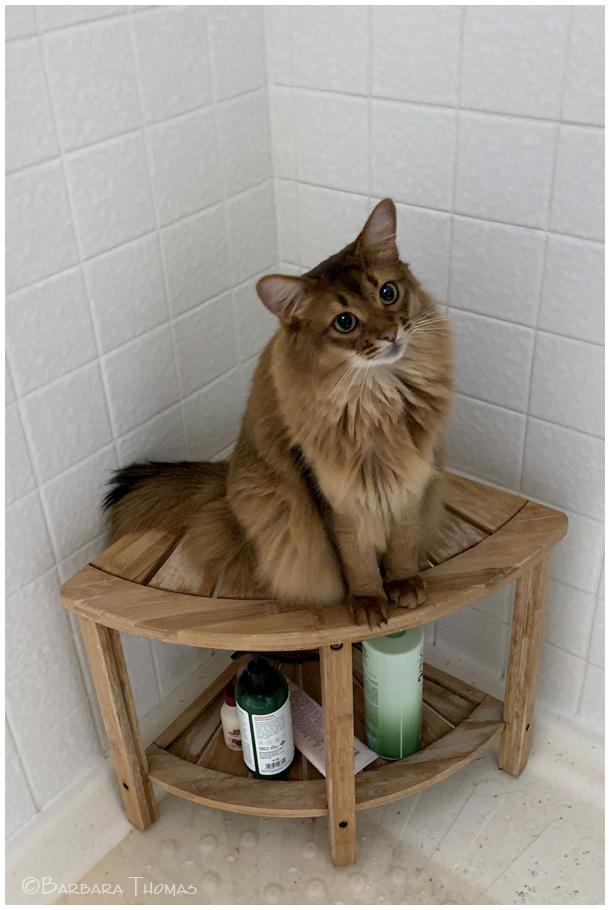 Shower Cat
