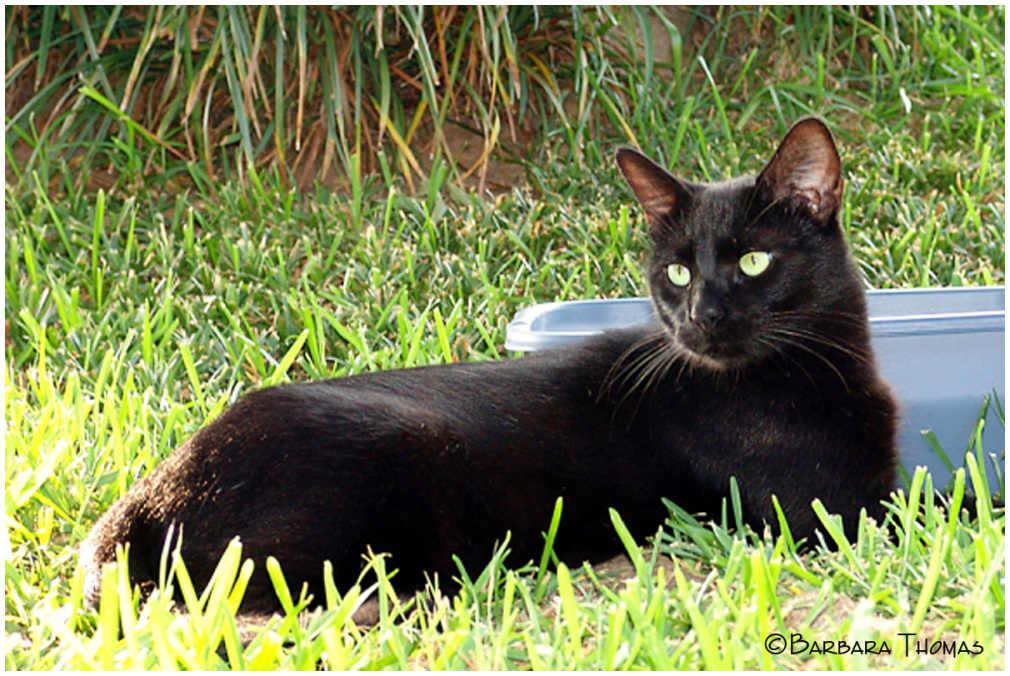 Rest In Peace Blackie