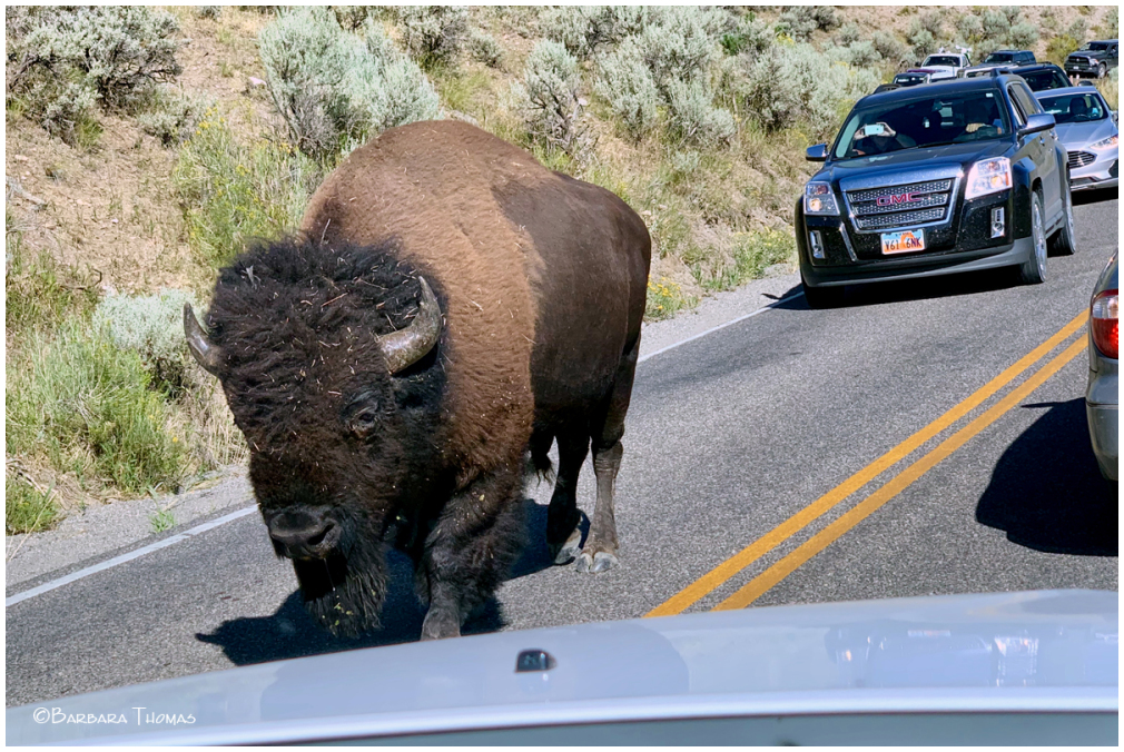 Bison Traffic Keep Right