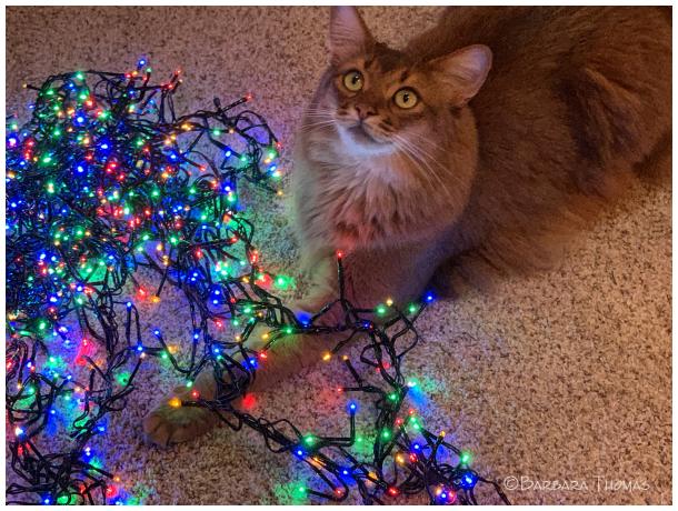 Untangling The Lights