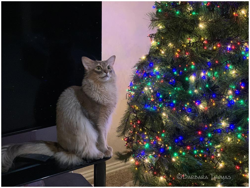 Jasper Loves The Tree