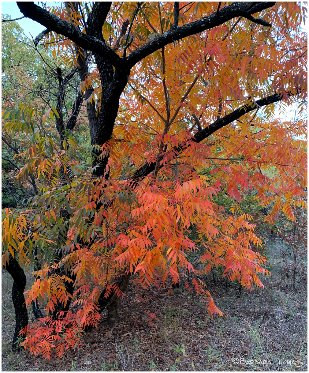Autumn Comes Late