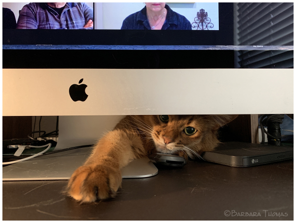 Zoom Meeting Distraction