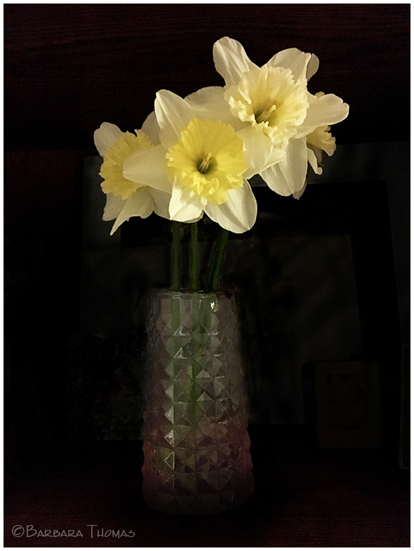 Daffodils - 2