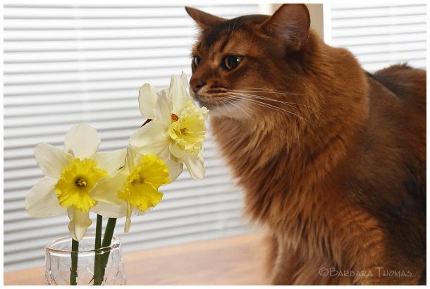 Daffodils- 3