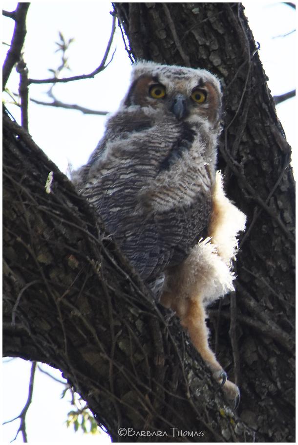 Owlberta The Baby Owl