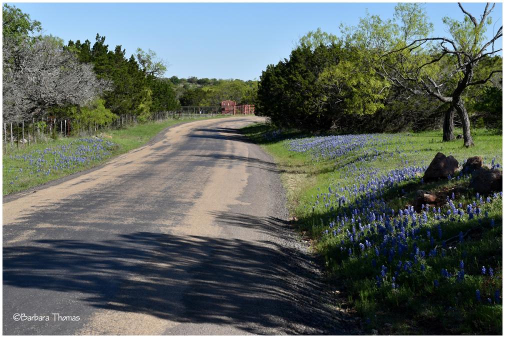 Roadside Wildflower