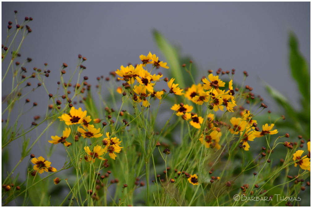 Lakeside Wildflowers