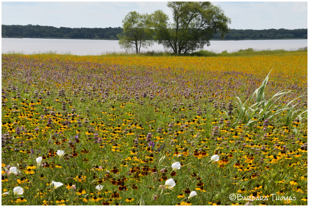 High Water & Wildflowers