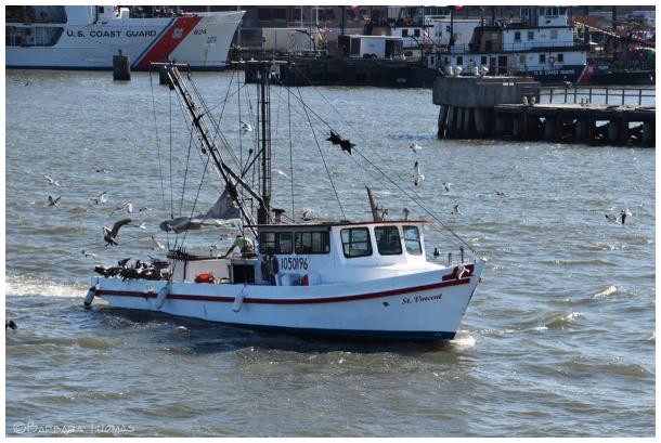Gulf Fishing Boat