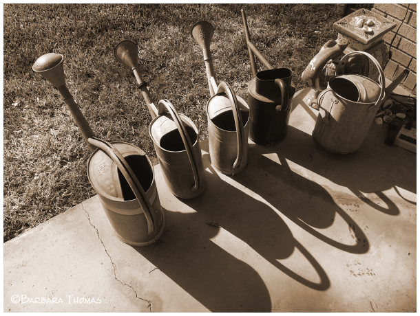 Watering Buckets