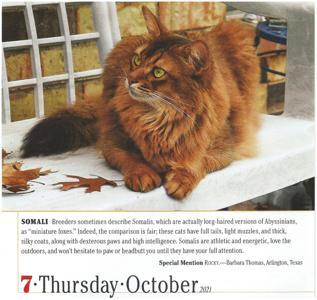 Page-A-Day Calendar Oct. 7, 2021