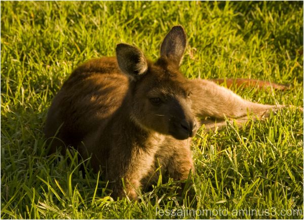 Resting on green grass