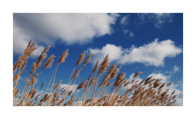 Reed and clouds