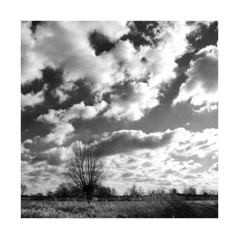 Reed and clouds (2)