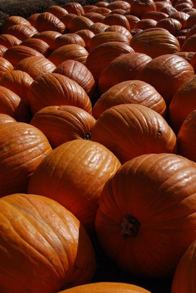 Pumpkin Patch Fall Pet Day