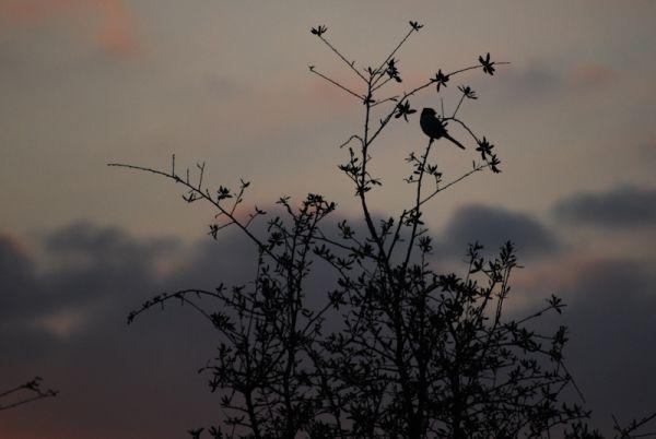 Bird Silhouette Evening