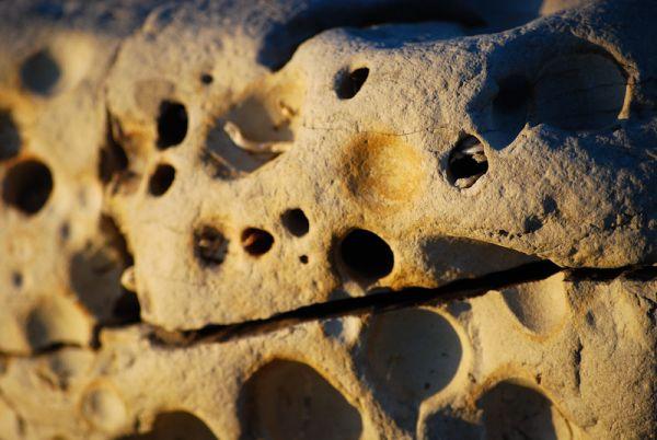 porous rock san francisco beach