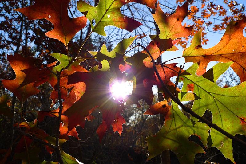 Fall Leaves Sun