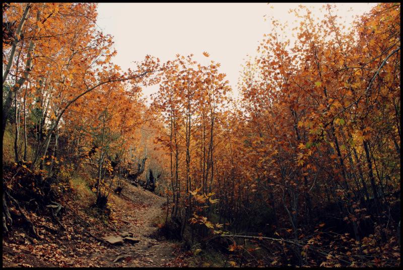 Nature of Qalat