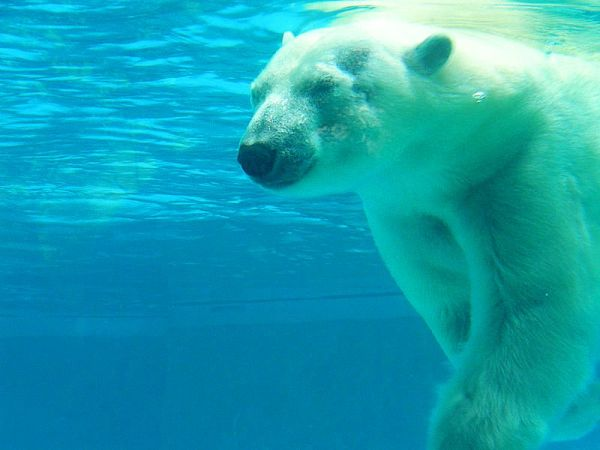 How About Joining Me For The Polar Bear Plunge!?!?